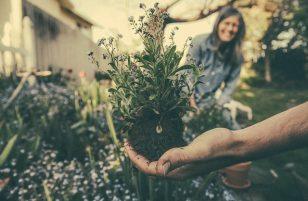 Come scegliere l'attrezzatura da giardinaggio