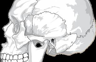 Ossa del cranio: ecco le caratteristiche di ognuno e dove si trovano