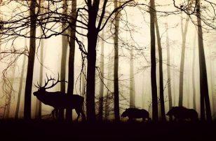 Animale quiz: quale tipo di animale sei? Dove si fa questo quiz?